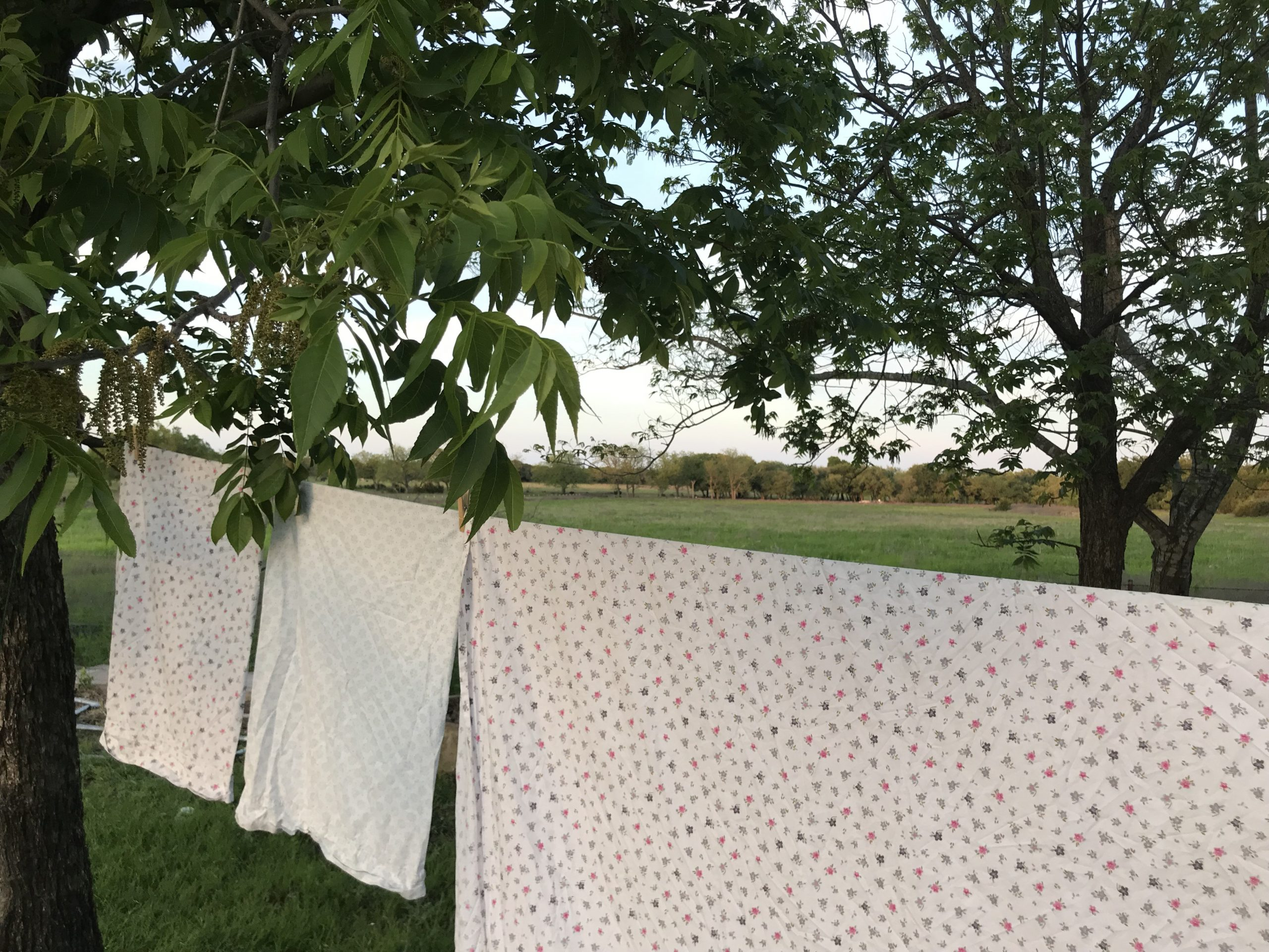 Why Every Homemaker Needs a Clothesline